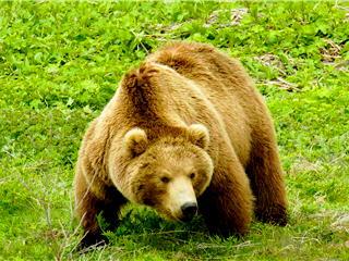 блюда из медвежатины рецепты